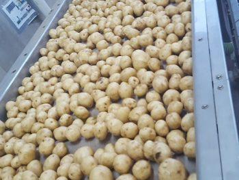Potato Felt Dryer